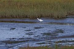 1331-23L (Lozarithm) Tags: arne rspb dorset landscape estuary herons egrets pooleharbour k1 55300 hdpda55300mmf458edwr