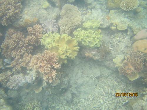 Manta Ray Bay 8
