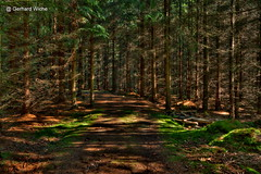 Steinpilzwald (GerWi) Tags: wald outdoor himmel abend sky sonne sun forest wiesen strase mnchenreuth haidefeld landschaft