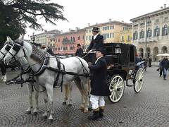 Verona - sfilata in Piazza Bra (Luciana.Luciana) Tags: italia verona cavalli veneto piazzabra calesse fieracavalli