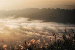F_DDF1284-DDF1285-芒草-Silver Grass-A Misty Sunrise-氳氤日出-五分山-Wufenshan-新北市-New Taipei City-台灣-Taiwan-中華民國-Rep of China-Nikon D700-Nikkor 70-200mm