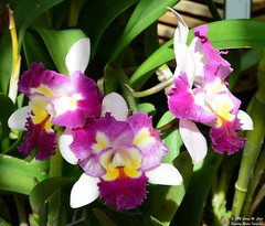 Orchids (George Case, Kountry Roads Imaging) Tags: flowers nature nikon case selbygardens nikkor18200mm sarasotacounty kountryroadsimaging d7000 blinkagain georgecase