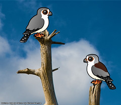 Birdorable Pygmy Falcon (birdorable) Tags: cute bird raptor falcon birdofprey pygmyfalcon birdorable