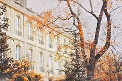 L'automne  Bordeaux (2) (Francoise Rachez (Away) {www.francoiserachez.com}) Tags: city autumn windows france leaves yellow architecture jaune automne background branches bordeaux ventanas amarillo getty otoo ville gettyimages fentres gettyimagesfrance