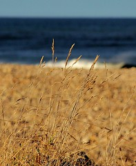 Grasses At Spey Bay (Sybalan,) Tags: grass bay coastal spey morayshire watersea