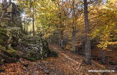Hayedo Tejera Negra 16 (ignacio izquierdo) Tags: autumn españa forest spain guadalajara bosque otoño negra tejera hayedo