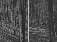 align yourself (Bindaas High) Tags: thanksgiving trees wild blackandwhite white black tree 50mm nice diptych f14 14 stellar mywork shadowplay woohoo coolcool ohyeah alignment align tych fixed50 artistsontumblr photographersontumblr bindaashigh