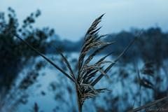 #Cold (DavideCori) Tags: blue plants lake cold nature canon focus italia streamzoo editoftheday