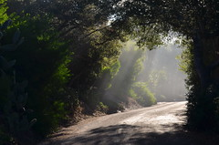 Breakthrough (MPnormaleye) Tags: california street morning trees light sunlight beautiful leaves composition forest sunrise landscape golden moody wideangle calm foliage fantasy environment roadside