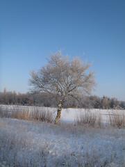 P2042275 (GemeenteUithoorn) Tags: winter mist water zonsondergang herfst brug eend koe koeien eenden bruggetje zwaan winterlandschap uithoorn meerwijk zijdelmeer