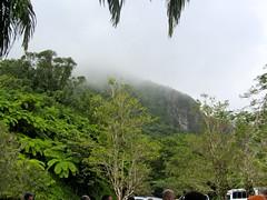 El Yunque Rainforest (desbah) Tags: rainforest puertorico elyunque