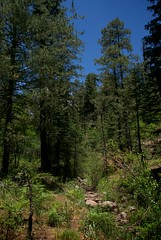 Pretty Canyon (Reptilian_Sandwich) Tags: blue wild summer plants mountains newmexico green water leaves forest walking outdoors oak rocks solitude solidarity aspen hillside slope streambed conifer afternoonlight blackrange prettycanyon