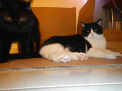 Give us a break (Ottmar H.) Tags: cat chat gato katze macska  kater  tomcat