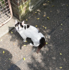 DSC05664 (Moldovia) Tags: blackandwhite pet animal cat nose eyes feline tail ears whiskers pointandshoot pointshoot catspotting catnipaddicts sonydschx1