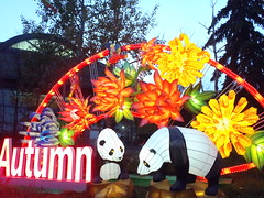 #illuminasia    #autumn (Mr. Happy Face - Peace :)) Tags: illuminations lumen lux luz light luce licht  lumire  illuminasia yyc cowtown autumn art2016
