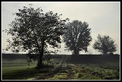 alberi (alessandrosantulli) Tags: alberi campagna nebbia mattino caserta santulli alvignano