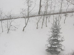 85713 Und dann geht es auch so (golli43) Tags: schnee winter sunset sun snow streets rain sunrise mushrooms heaven himmel wolken neighbours pilze sonne katzen nachbarn homesweethome regen spaziergnge perser nahverkehr streetlive
