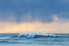 Gull wave (Ian@NZFlickr) Tags: ocean winter beach rain clouds pacific gull wave east nz otago hampden notadded