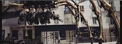 Kumo - Nantes (Le cosmonaute) Tags: araignee bretagne epsonperfectionv700photo exiftool gnd hasselblad45mmf4 hasselbladxpan kodakgold200 kumo nantes