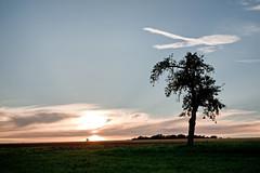 Red ribbon/Aidsschleife (Vitatrix) Tags: wolke outdoor abendlicht natur nature spaziergnger baum himmel galgenbergnt