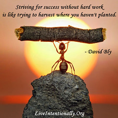 quote-liveintentionally-striving-for-success-without-hard (pdstein007) Tags: quote inspiration inspirationalquote carpediem liveintentionally
