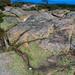 2009-09-05_12-26-39Bar Harbor Maine2009-09-05_12-26-39Bar Harbor Maine