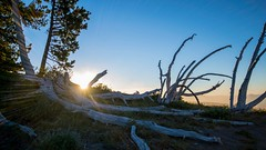 Sunrise On The Pacific Creast Trail (daynawines) Tags: sunrise hill mountainside sun landscape outdoors
