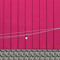 """There's no limit to how much you'll know, depending how far beyond zebra you go."" -- Dr. Seuss (msdonnalee) Tags: minimalism minimalisme minimalismo shockingpink zebraprint abstract digitalfx pinkwall lightbulb"