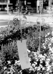 (perspiration) (Dinasty_Oomae) Tags: arco arco35  35   monochrome blackandwhite blackwhite outdoor street tokyo    chiyodaku  kandaogawacho windbell