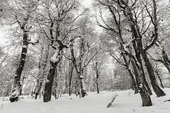 Snowy Chapelco I (tm1126) Tags: chapelco blackandwhite d7100 snow bw covered monocrome nikon skiresort white