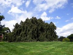 Bayard Cutting Fields Arboretum (61) (pensivelaw1) Tags: suffolkcounty newyorkstate longisland bayardcuttingarboretumstatepark