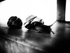 lumache (Giorgio&Dot) Tags: lumache lumaca