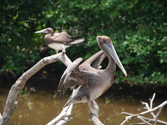 P2230301 (Gareth's Pix) Tags: aviarionacionaldecolombia baru colombia aviario bird