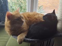 Taz and Leeloo (Clare_leeloo) Tags: cats cutecat felines