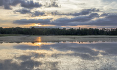 Reflecting on the Moment (SteveFrazierPhotography.com) Tags: lake heron sunset egrets pelicans birds islands reeds grasses clouds trees treeline water reflections shore shoreline beautiful highway136 illinois il usa unitedstates america stevefrazierphotography sun