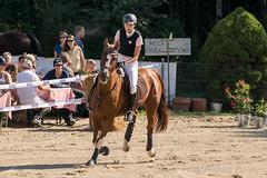 DSC01957_s (AndiP66) Tags: hindelbank bern schweiz ch aespli derby springen 2016 pferd horse switzerland kantonbern cantonberne concours wettbewerb horsejumping springreiten pferdespringen equestrian sports pferdesport sport martinameyer grueb wolhusen luzern sony sonyalpha 77markii 77ii 77m2 a77ii alpha ilca77m2 slta77ii sony70400mm f456 sony70400mmf456gssmii sal70400g2 andreaspeters september