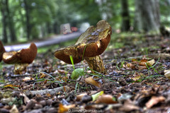 Edzell Woods 15 Sept 2016-0001.jpg (JamesPDeans.co.uk) Tags: digital downloads for licence edzellwoods woods fungi prints sale unitedkingdom scotland britain edzell nature plants trees angus man who has everything gb europe uk james p deans photography digitaldownloadsforlicence jamespdeansphotography printsforsale forthemanwhohaseverything