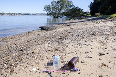 Rubbish plastic and glass bottles copyright Rosie Nicolai (Happy days 09) Tags: australia kissingpointpark nsw putney worldcleanupday rosienicolai glass plastic mangroves cleanuptheworldday straws pink blue river parramattariver ourlivingriver environment bridge rydebridge urban houses homes naturalresource water