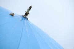 (atacamaki) Tags: xt1 50140 xf f28 rlmoiswr fujifilm jpeg atacamaki umbrella japan rain frog