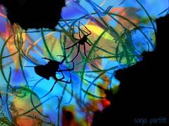 spiders (Sonja Parfitt) Tags: test