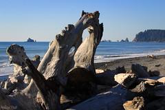 Nature's Sculpture (San Francisco Gal) Tags: ocean sea beach nature stone landscape sand rocky wave olympicpeninsula driftwood pacificocean headland seastack rialtobeach thegalaxy opympicnationalpark