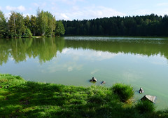 Str pond (Gregor  Samsa) Tags: highlands pond czech czechrepublic vysoina cesko esko eskrepublika vysocina vrchovina strz ceskomoravska czechmoravian eskomoravskvrchovina eskomoravsk str ceskomoravskavrchovina czechmoravianhighlands