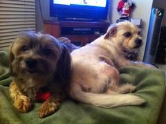 Daisy and Barny