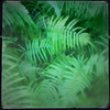 Fern Gully (Kevin B Photo) Tags: park morning autumn wild plants usa plant abstract motion blur color green nature beautiful beauty closeup america square outside outdoors photography movement colorful day alone exterior unitedstates graphic natural artistic florida native south peaceful calm southern everglades vegetation daytime fl evergladesnationalpark southeast ferns serenitynow kevinbarry iphone4 wowiekazowie colourlicious 100ypl