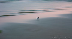 1205_Rantum Wland Strand_011-22 (Anne-Katrin Gerner) Tags: sea bird beach water strand sand meer wasser shore vogel sanderling