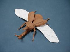 kabutomushi V3 1/4 (shuki.kato) Tags: paper insect flying wings origami helmet beetle super samurai fold complex scarab kabutomushi allomyrina dichotoma