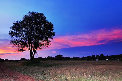 A lonely tree & the Belt of Venus
