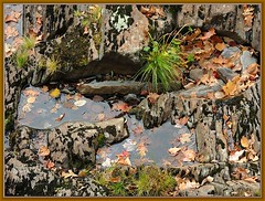 Hudna (Walter A. Aue) Tags: autumn canada fall water grass leaves rock novascotia route10 nictauxfalls walteraaue