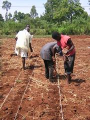 planting trials