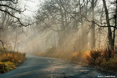 Misty Dawn (TooLoose-LeTrek) Tags: road morning nature fog haze woods detroit sunbeam belleisle hs30